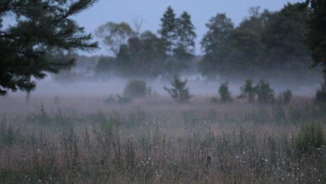 mgła mała